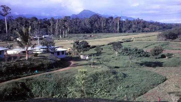 Family Farm to PNG Development Bank—Story of a Didiman – Part FIVE – Sept 2020 Kundu