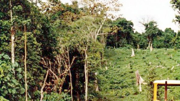 Food Forests of West New Britain PETER STACE – PNGK June 2021