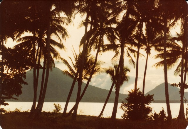 02 - View_through_the_coconuts